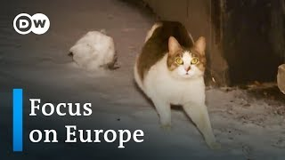Russia: A nation of cat lovers mobilizes to provide shelter for strays  | Focus on Europe - DEUTSCHEWELLEENGLISH