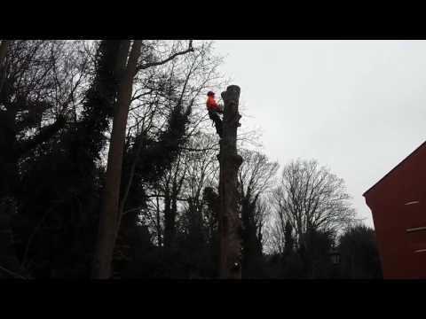 Stihl MS660 chainsaw, climbing and sectional felling.