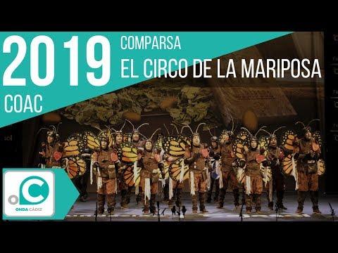La agrupación El circo de la mariposa llega al COAC 2019 en la modalidad de Comparsas. Primera actuación de la agrupación para esta modalidad.