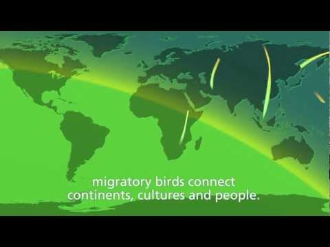 "WMBD 2012 Trailer. ""Migratory birds and people - together through time"""