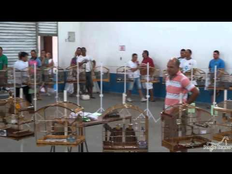 Torneio de Pássaros Silvestres 09/02/2014 CBSA / Santo André - SP