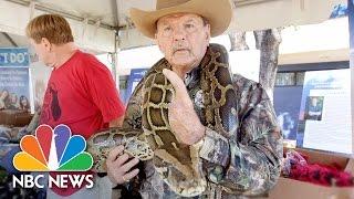Snake Hunters Descend On Florida For The Pythons Challenge | NBC News - NBCNEWS