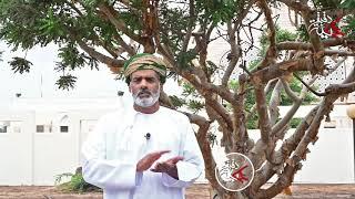 الأستاذ/ أحمد محاد المعشني في #دقيقة_عمانية يتحدث عن