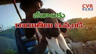 కనుమరుగవుతున్న ప్రభుత్వ భూములు - జీవాల పెంపకాన్ని తీవ్ర ఇబ్బందులు| Raithe Raju |Srikakulam |CVR NEWS - CVRNEWSOFFICIAL
