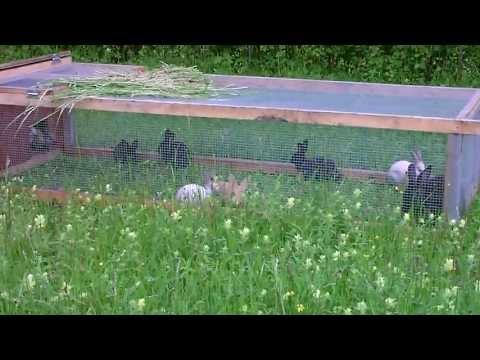 Elevage de lapins en pleine air AB