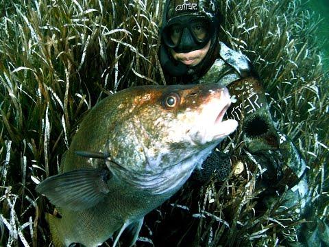 Pesca sub e mimetismo: Pescatore in apnea invisibile
