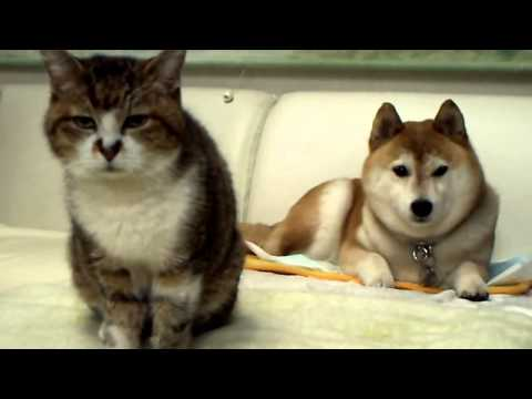 Cute Kitty and Dog