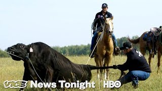 The Russian Cowboys At One Of The World's Biggest Cattle Operations (HBO) - VICENEWS
