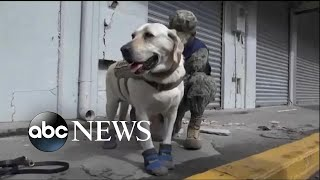 4-legged hero amongst the first responders in Mexico City - ABCNEWS