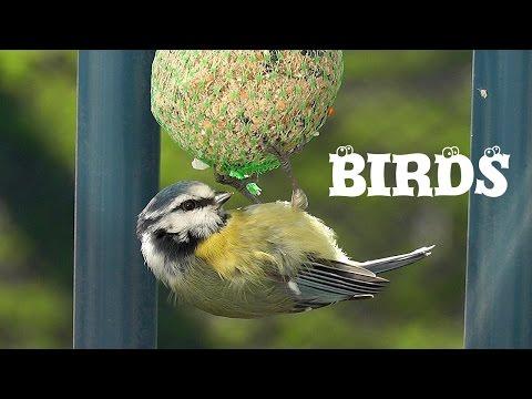 Wild birdwatching [HD]