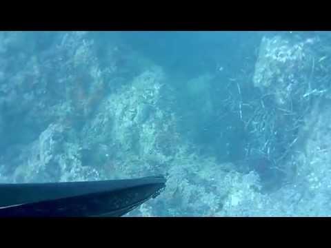Pesca sub - Spigola 7,5 Kg
