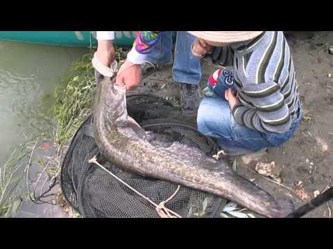 ловля сома на волге с эхолотом на квок