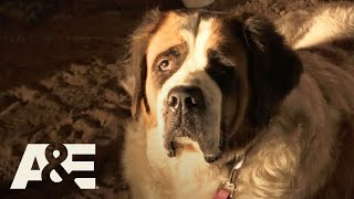 Live PD: Abandoned St. Bernard (Season 2)   A&E - AETV