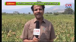 రబీలో రాగుల సాగుకు  అనువైన రకాలు  | Dr.Subba Rao |  Raithe Raju | CVR NEWS - CVRNEWSOFFICIAL