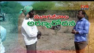 మూగజీవాల అరణ్యరోదన: Officials Negelct On Cattle insurance in Narayankhed   Sanga reddy  రైతే రాజు - CVRNEWSOFFICIAL