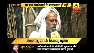 Master Stroke: Betel farming restricted to 60-70 acre only in Mahoba, UP - ABPNEWSTV
