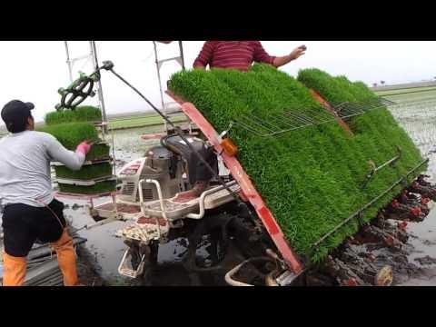 Amazing rice planting machine