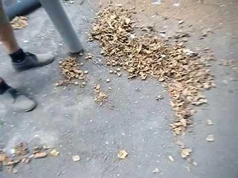 Macchina per raccolta nocciole