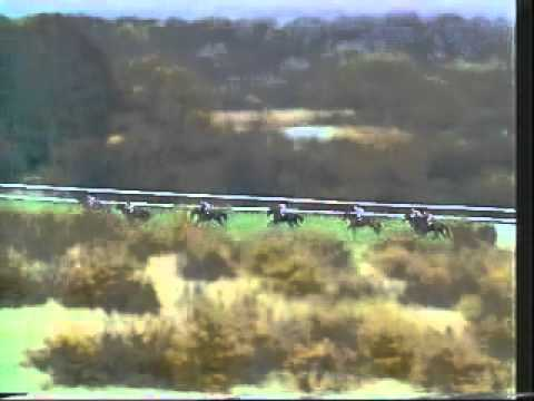Horse Racing 1980 Fighting 5th Hurdle Newcastle. Birds Nest & Sea Pigeon.avi