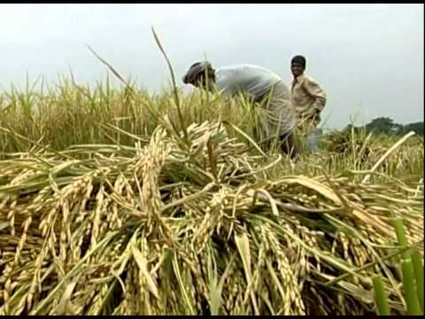 Southern Promise (Bangladesh) - IFPRI