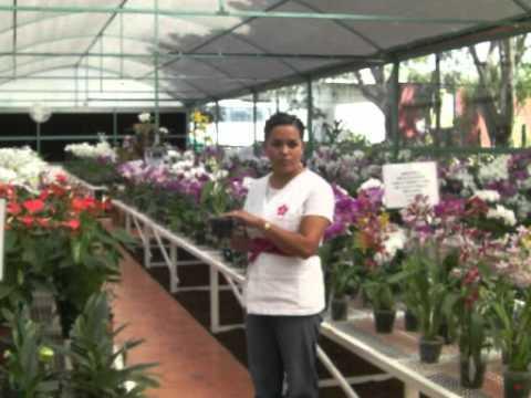 invernadero de phalaenopsis en méxico