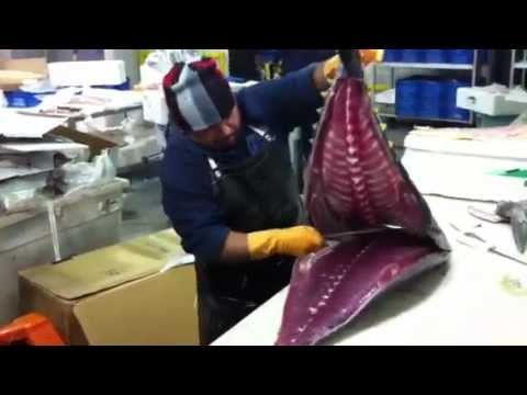Butchering Yellowtail Tuna at ABS Seafood