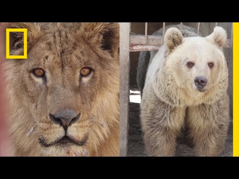 War-Torn Zoo's Last Surviving Animals Rescued in Mosul | National Geographic