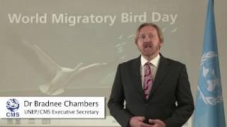 الاحتفال العالمي بالطيور المهاجرة