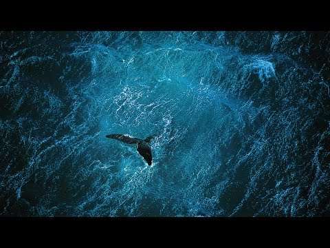 Planet Ocean 2012 documentary movie, default video feature image, click play to watch stream online