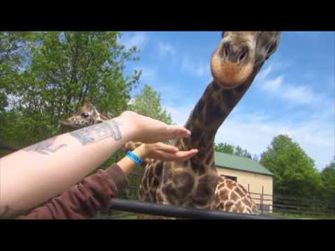 Giraff Eats Children  Vlog day 038