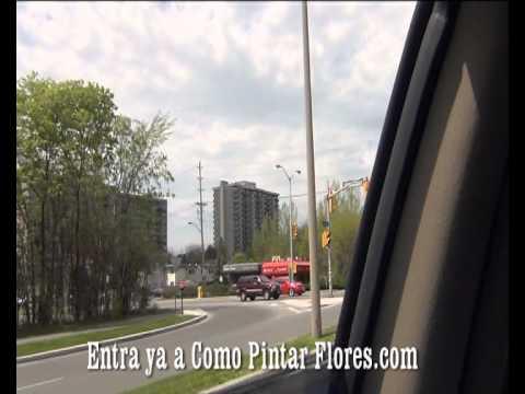 !! COMO PINTAR FLORES TE COMPARTE FESTIVAL DE TULIPANES (3) !!
