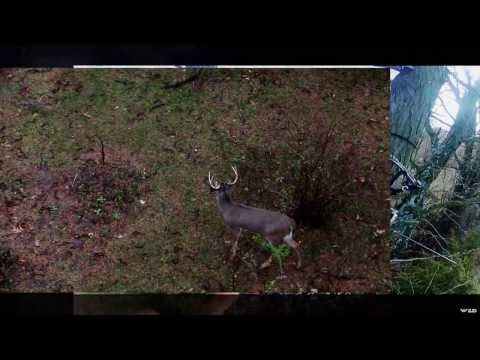 Bowhunting a Massive 10 Point Whitetail