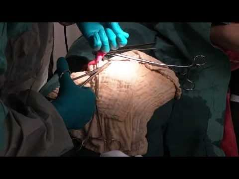 Veterinary Education: Exploratory Laparotomy in a Cat