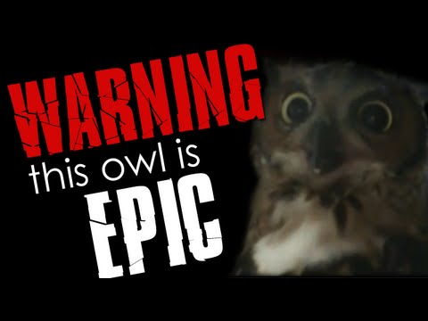 WARNING: This owl is epic