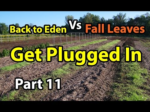 Back to Eden Organic Gardening 101 Method with Wood Chips - Leaves Composting G. Series # 11