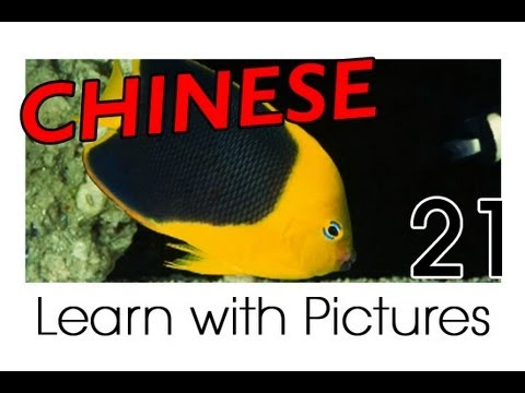 Learn Chinese With Pictures - Marine Animals