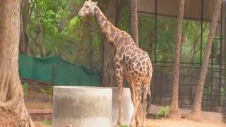 17 Mar, 2018: South Indian zoo gets 'cooler' for inmates to beat the heat - ANIINDIAFILE