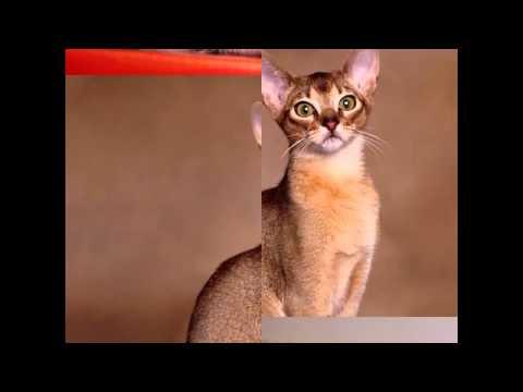Một số hình ảnh về con mèo