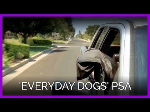 PETA's 'Everyday Dogs' PSA