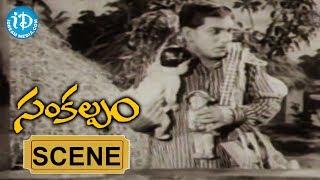 Sankalpam Movie Scenes - Relangi Venkatramaiah Introduction Comedy || NTR || Vijayalakshmi - IDREAMMOVIES