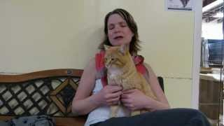 MEOW Foundation's Kitty Pick Danny.avi view on youtube.com tube online.