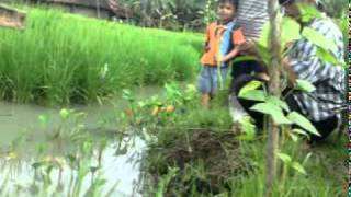 mancing di sawah view on youtube.com tube online.