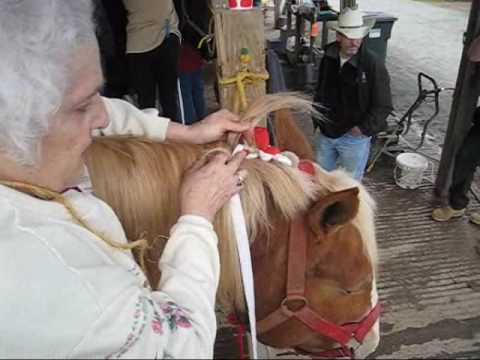 How To Braid Draft Horse Mane and Tail for Show