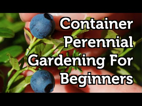 Container Gardening For Beginners -- Perennial Fruits