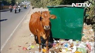 मध्य प्रदेश के भोपाल में गायों का पहला श्मशान घाट - NDTVINDIA