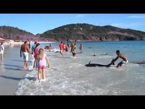 Turisti spasili delfine