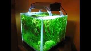shrimp cube