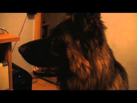Czy pies potrafi tęsknić za zmarłym przyjacielem?