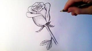 comment dessiner facilement une rose