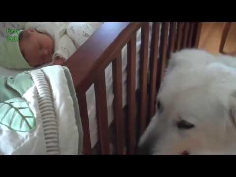 O Encontro De Cachorros e Bebês Pela Primeira Vez